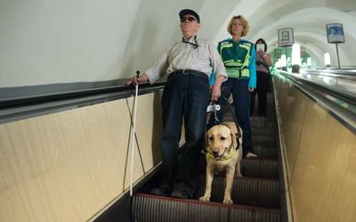 image for It's International Assistance Dog Week!
